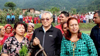 काठमाडौको झोरमा गृहमन्त्रि थापाको रोपाई मोह (फोटो फिचर )