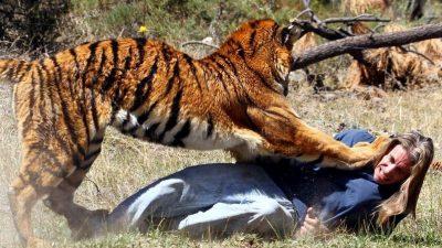 चितवनमा बाघको आक्रमणबाट चौधरीको ज्यान गयो